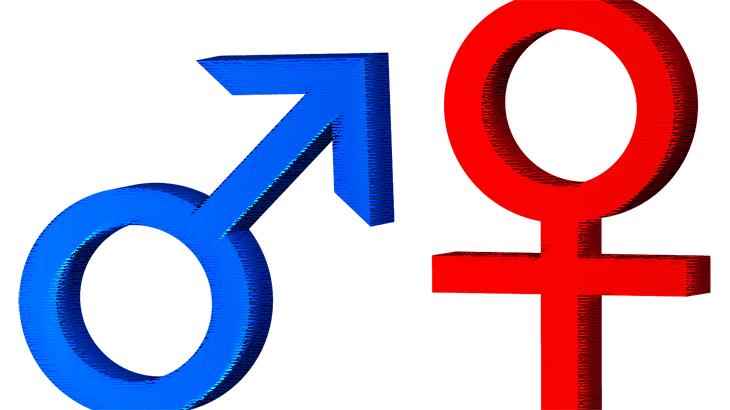 雄型と雌型(イラスト風)