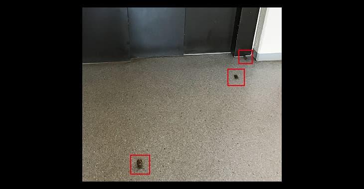 エレベーターホールにセミが三匹