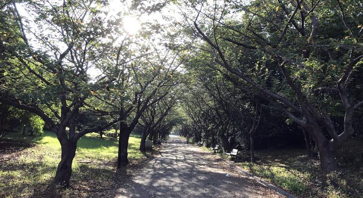 臨海公園内を進みます。この時期、公園内はセミの大合唱です。